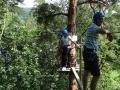 32 treetop