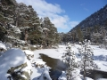 018-caledonian-pines-rivers-and-fresh-snow