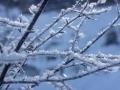 030-cristal-twigs