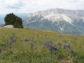 Day 1. Wild flowers in Aragon Pyrenees