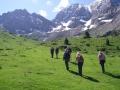 pyrenees-taster-walking-2